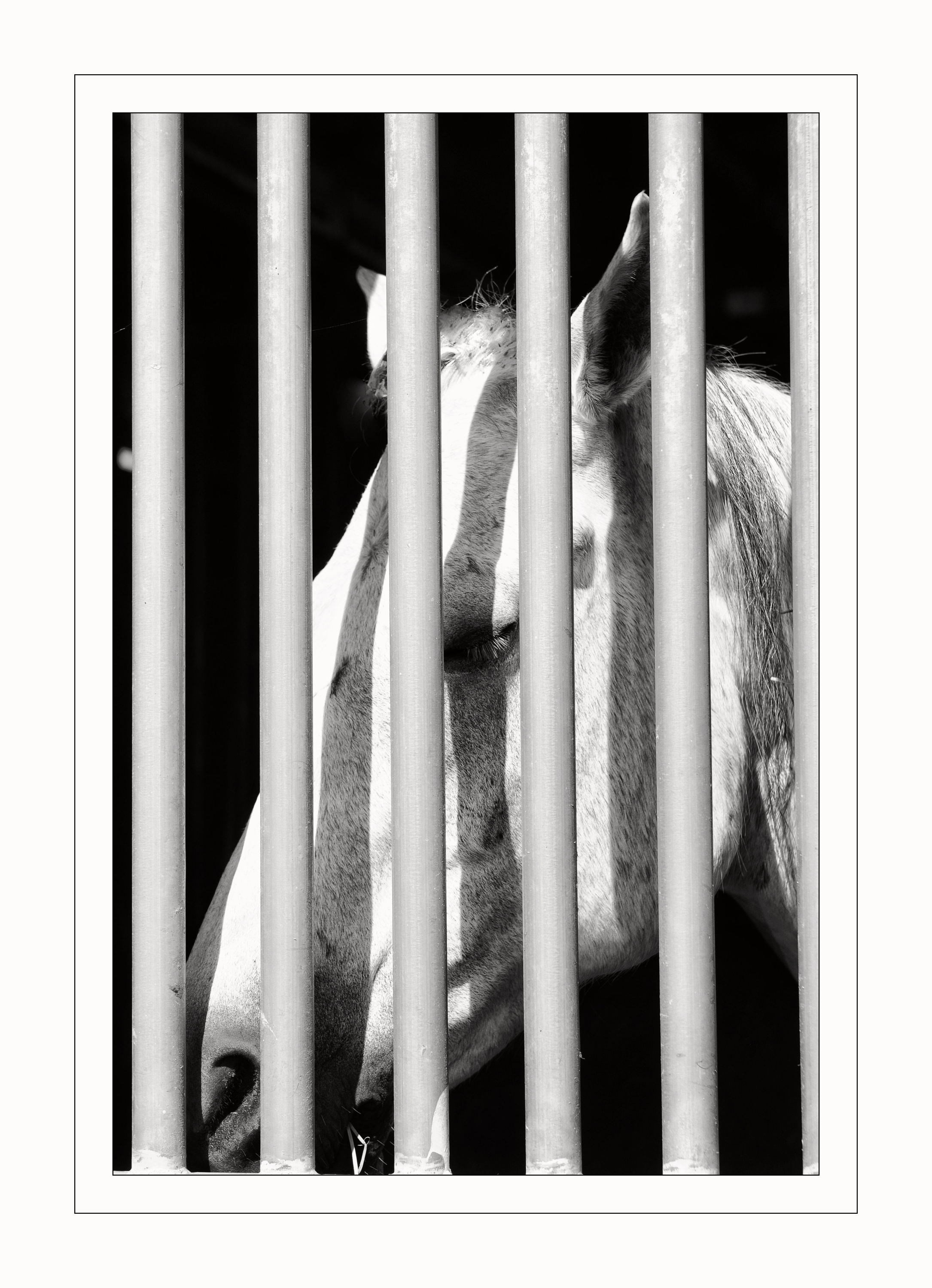 A Horses Time OUt
