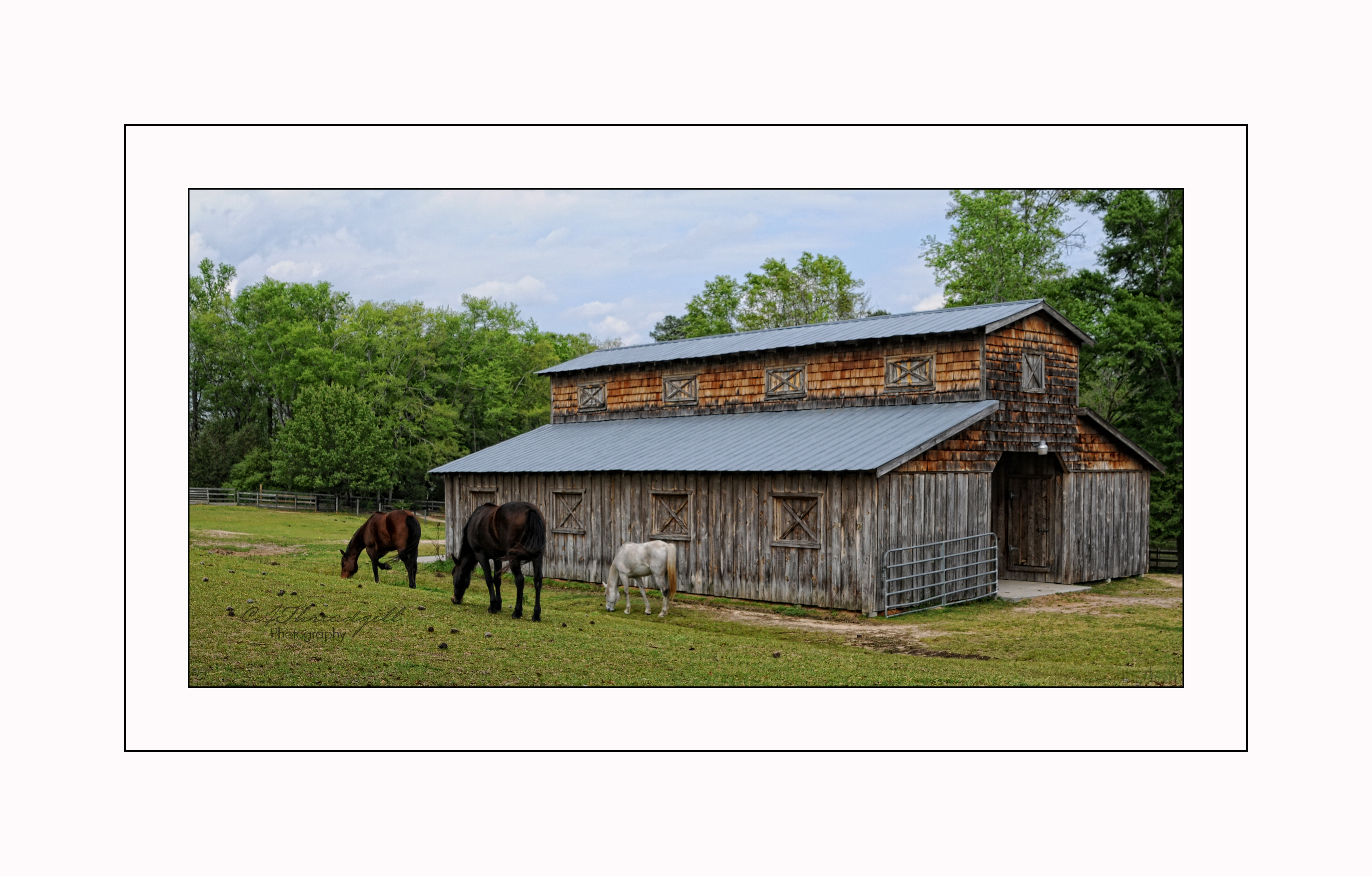 Horses ranch farms c a threadgill photographyc a for Ranch and rural living
