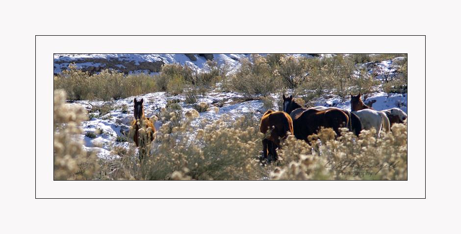 New Mexico Winter #1