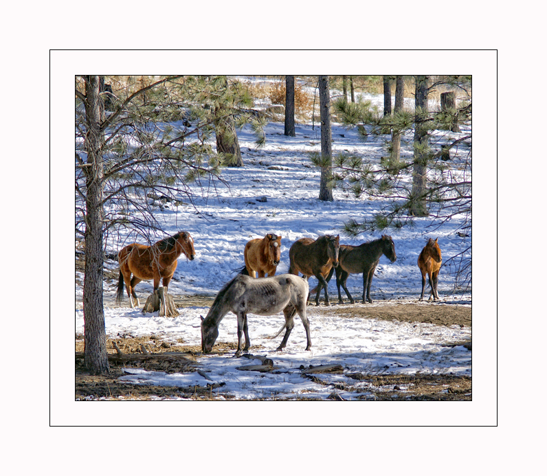 New Mexico Winter #2