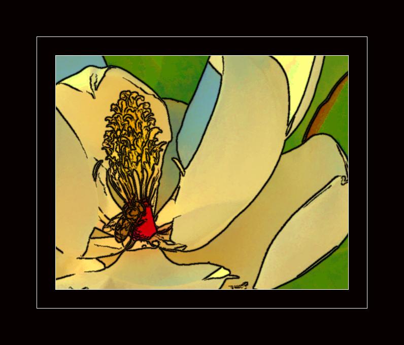 Magnolia on Bee