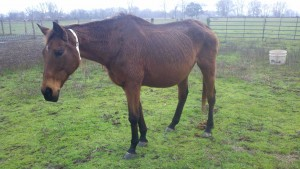2012-01-25.Ryder mare